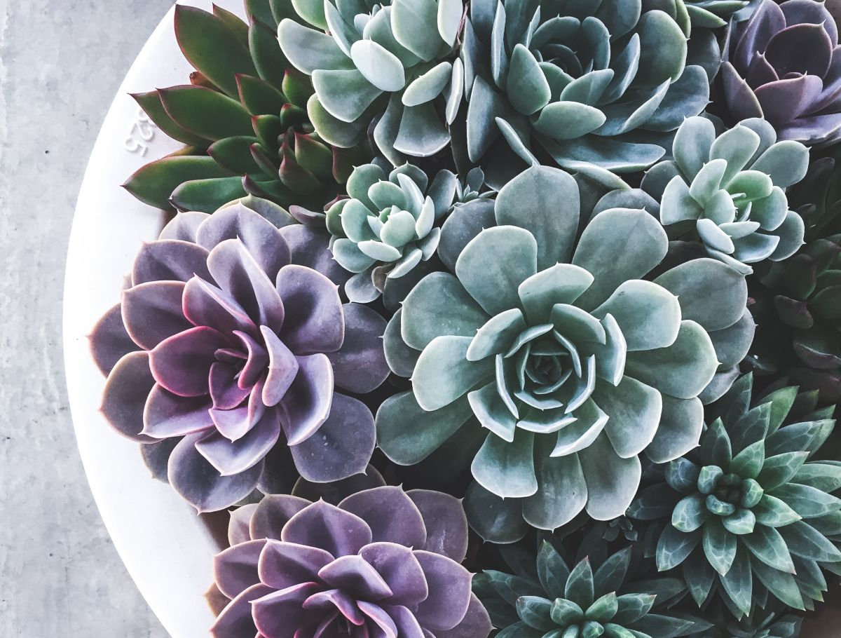 Top tips on how to care for succulents