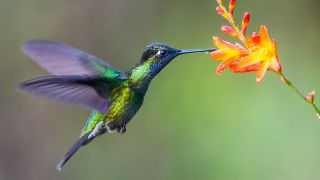Hummingbirds' wingbeats are the fastest among all birds, flapping 70 times per second.