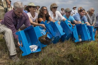 Birds bred at the San Diego Zoo are released into the wild