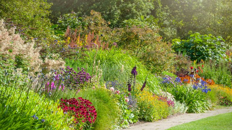 border of heleniums, colorful plants and grasses