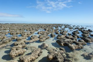 Stromatolites, which are brownish-grey rock-like structures, dot the shallow waters of Shark Bay in Australia.