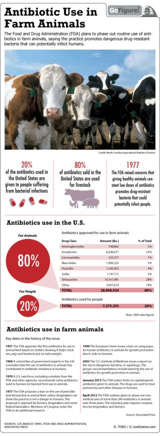 The FDA is set to end the use of antibiotics in animals to help curb the spread of drug-resistant bacteria.