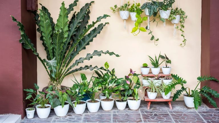 pot-scaping – a range of white pots containing plants arranged on a patio space