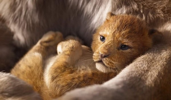 The Lion King baby Simba in his mother's arms