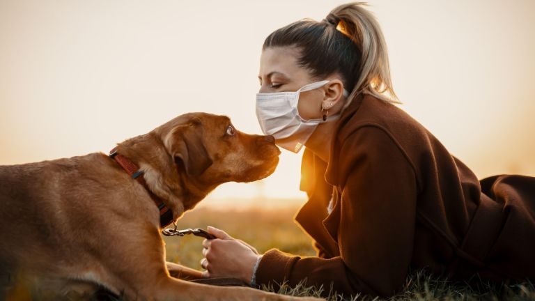 Dog walking woman wearing a protective mask is outdoors because of the corona virus pandemic covid-19