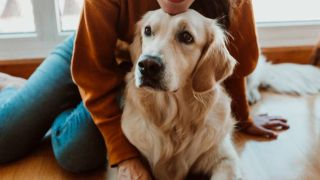 best dogs for emotional support