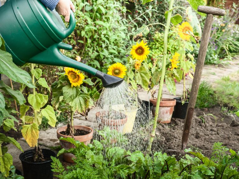gardening tips for a heatwave