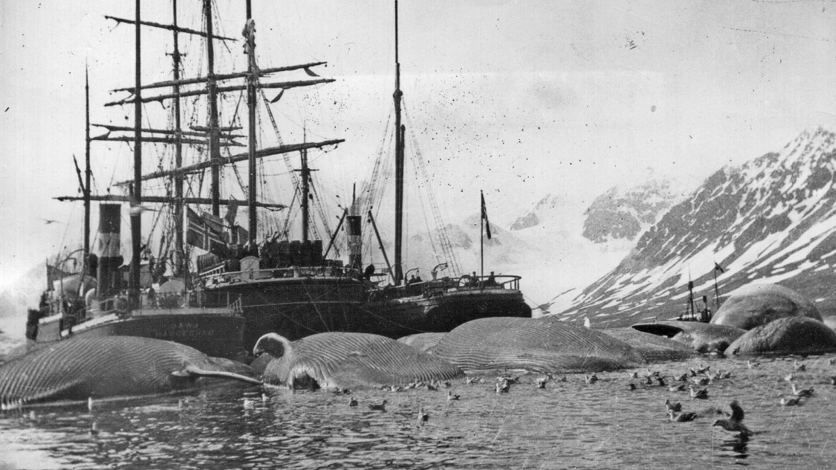 Why was whaling so big in the 19th century?