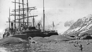 This 1905 photo shows a whaling ship surrounded by several dead whales in Spitsbergen, Norway.