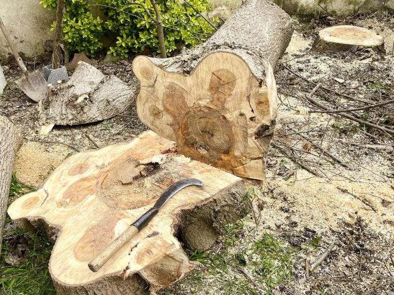 how to kill a tree stump: tree chopped down with the stump left in the ground