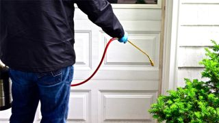 What to consider about pest control services