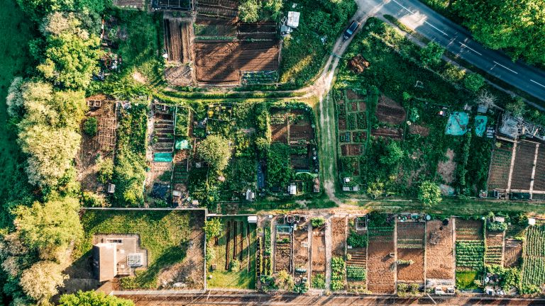 An aerial view of allotments in England