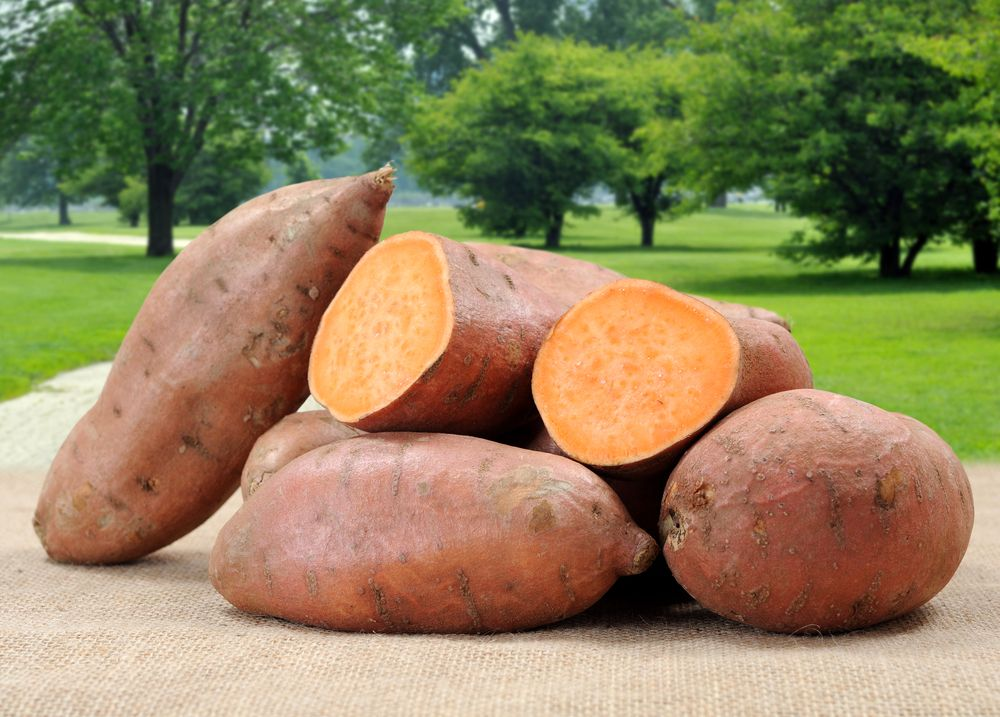 Sweet Potatoes: Delicious and Nutritious   Live Science