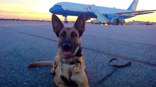 Secret service dogs lying down in front of plane