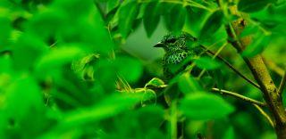 Bird camoflauged in rainforest