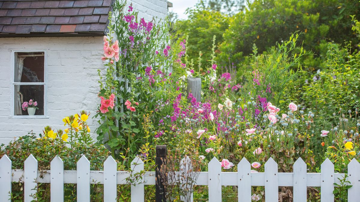 Cottage garden plants – the top flowers and shrubs to grow