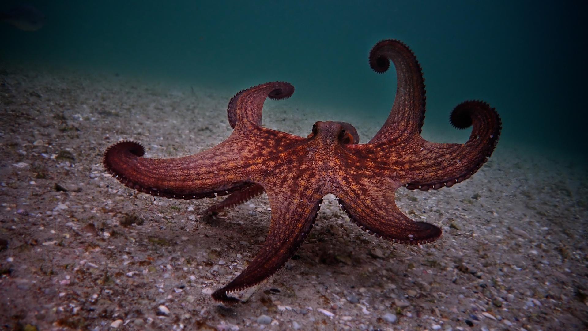 Mejores documentales de Netflix: My Octopus Teacher