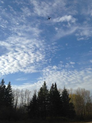 A drone flies toward the location of a collared bear in northwestern Minnesota.