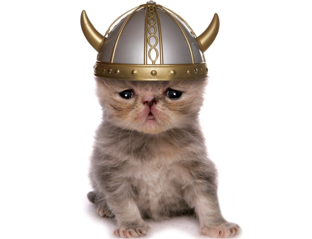 Early Cats Traveled with Vikings and Farmers | Live Science