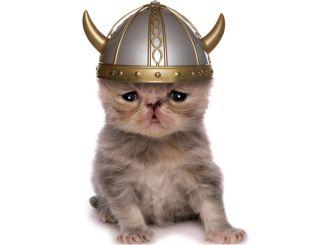 Shorthair kitten wearing a Viking hat.