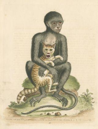 Monkey snuggling a kitten