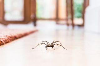 A spider on the floor.