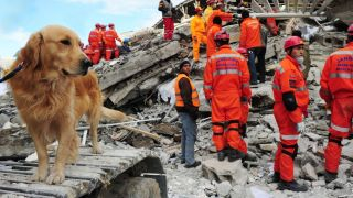 Working dogs - search and rescue