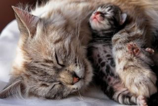 mama cat with kitten