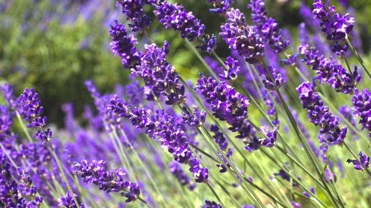 5 plants that love full sun: add these to your planting scheme