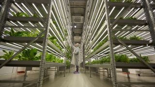 How vertical farming tech could bring fresh greens to the