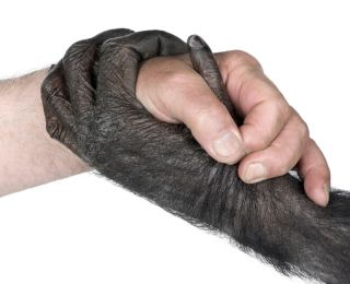 handshake between Human hand and ape hand