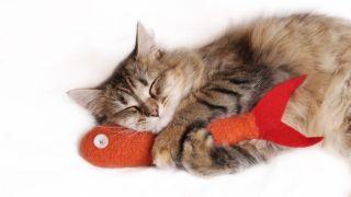 Best Fish Cat Toys