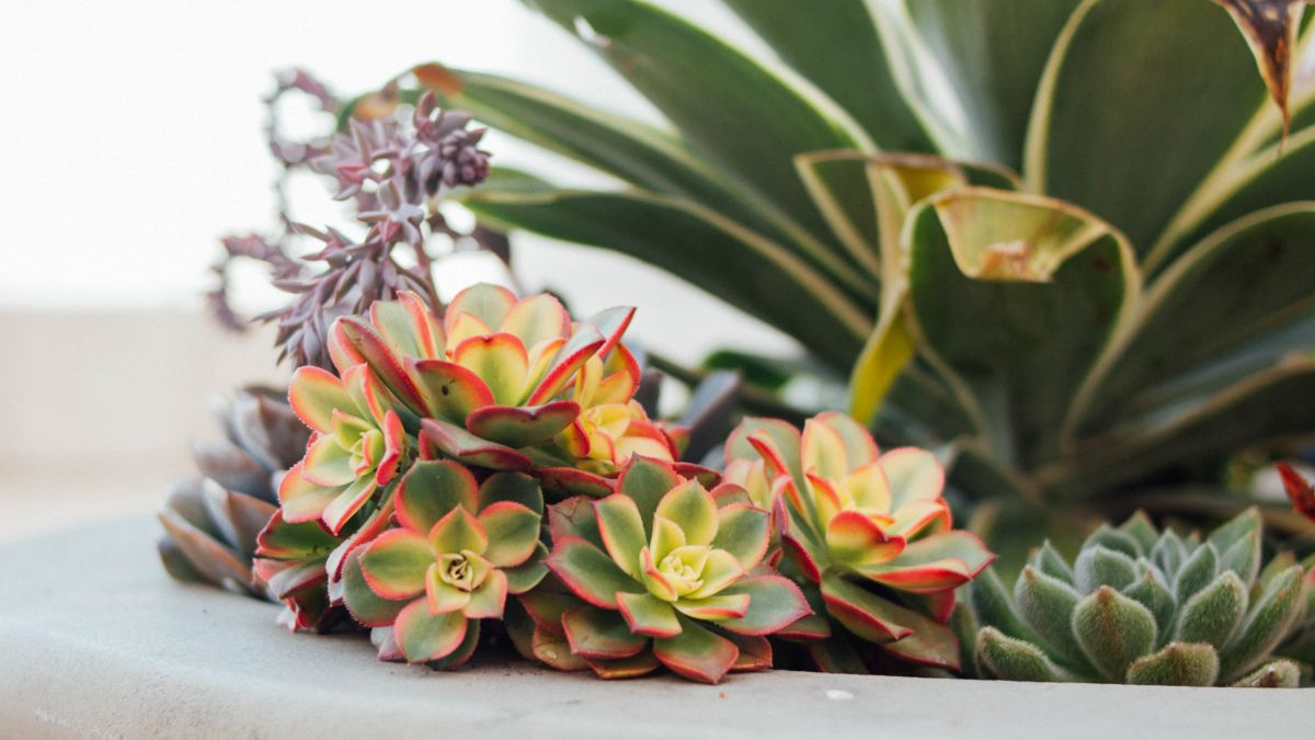 The top 3 reasons why your houseplant is dying REVEALED