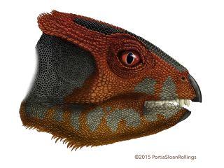 Ceratopsian dinosaur from China