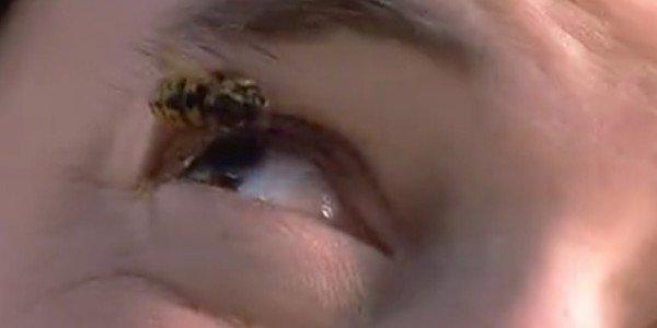 Election - Bee Scene SCREENSHOT