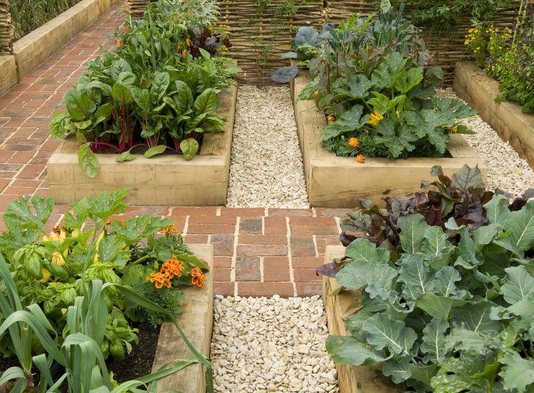 Monty Don vegetable garden tips for March