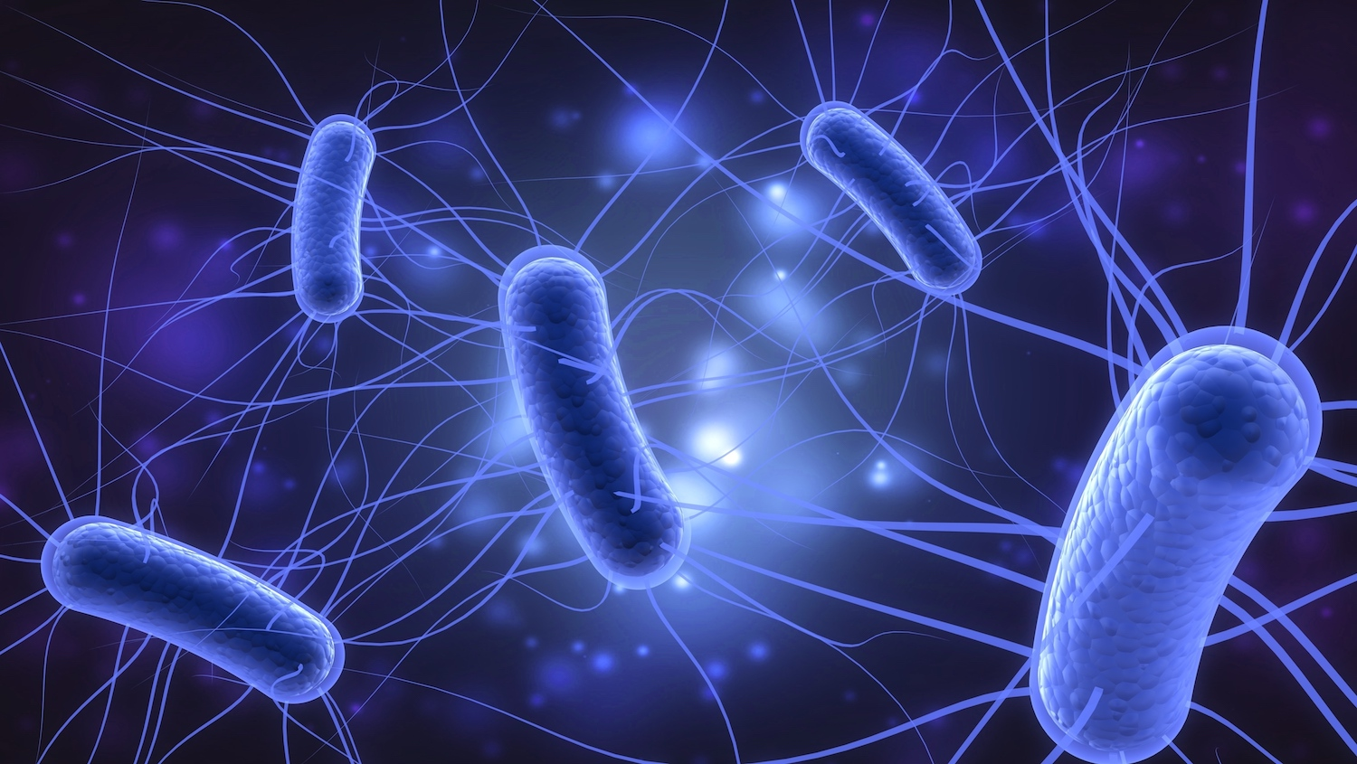 Image result for e-coli