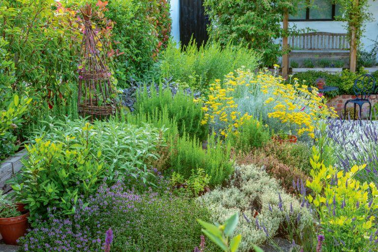 herb gardening mistakes