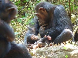 Devota with her chimp infant