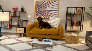 dog living room