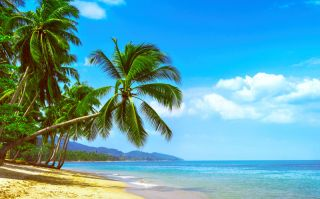 A beach with palm trees.
