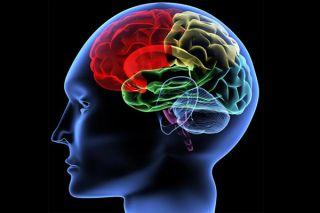 brain, use, used, 10 percent, how much, brains, unused