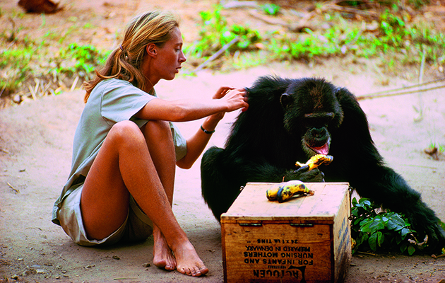 Jane Goodall had no scientific background when she headed for Africa on her own to study the apes.