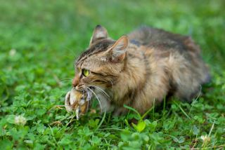a domestic cat with bird in its mouth