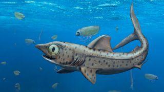Illustration of the prehistoric shark Ferromirum oukherbouchi.