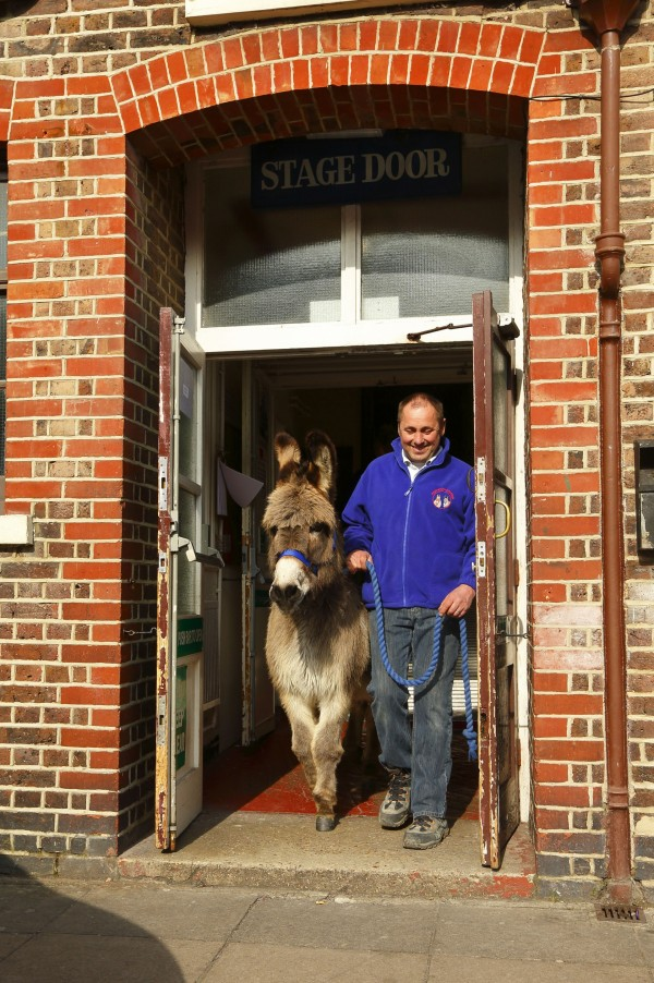 A man leads a donkey out of the stage door in London's Wets End