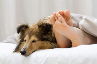 Sharing a Bed with Fido Can Make You Sick | Live Science