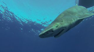 Large creatures, sharks