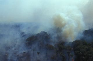 wildfires burn the amazon rainforest