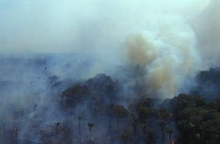 wildfires burn the amazon rainforest